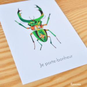 carte scarabee